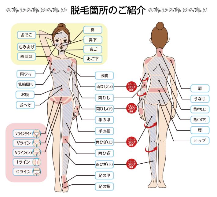 キレイモ渋谷道玄坂店、キレイモ渋谷宮益坂店で出来る全身33部位の脱毛